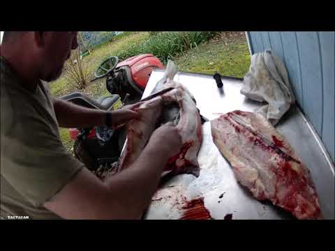 How To Clean A Paddlefish
