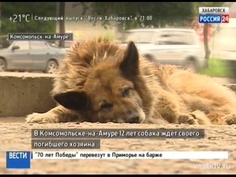 Вести-Хабаровск. Комсомольский Хатико