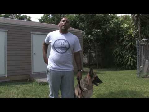 dog-training-tips-:-how-to-stop-your-dog's-excessive-barking