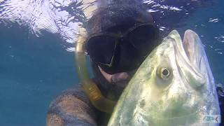 Pescasub : Leccia Amia 28 kg. Santa Marinella
