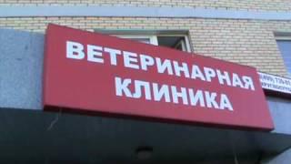 вызвать ветеринара www.mskvet.ru(, 2010-07-05T13:03:04.000Z)