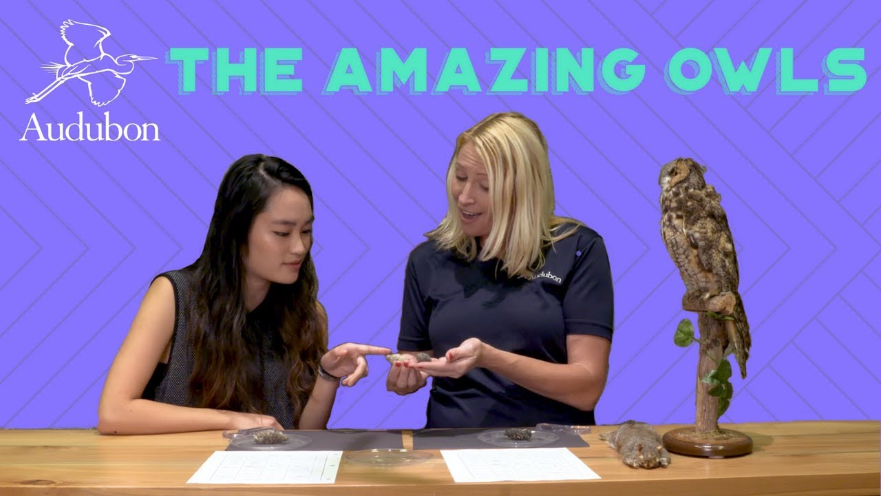 The Amazing Owls | Ep 2 | Pellet Dissection - YouTube