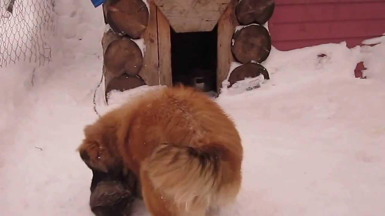 декабрь 2013 наш дом 032. собака с кошкой. - YouTube