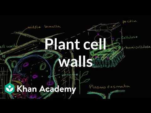 Plant cell walls | Structure of a cell | Biology | Khan Academy