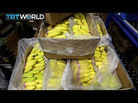 Angola turns to bananas to diversify economy | Money Talks