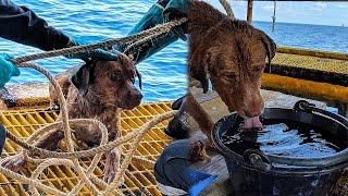 Собака уплыла в море на 220 км и ее случайно увидели работники нефтяной платформы