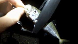 Вечерняя рыбалка на ставриду с берега