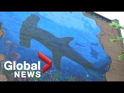 Canada Bans Trade in Shark Fins