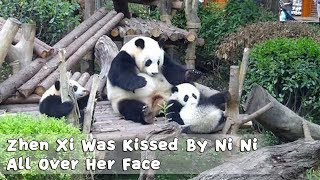 Zhen Xi Was Kissed By Ni Ni All Over Her Face | iPanda