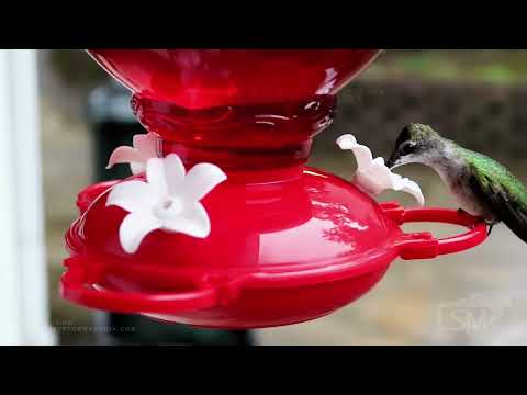 07-27-2021 Pell City, AL - (Up-Close) Hummingbirds on a Feeder during Afternoon Thunder and Rain