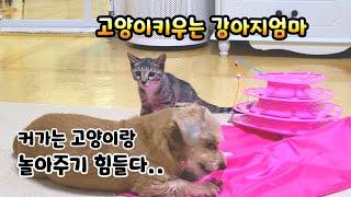 처음본 장난감을본 강아지 고양이의반응이 너무 달라요