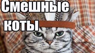 Самые смешные коты на фото