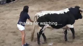 Angry Bull Vs People - Best Short Funny Vines 2019 - If you Laugh you Loose !!!!