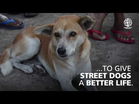 Helping street dogs all over the world
