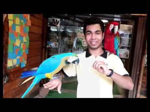 what inside the zoo||kl tower mini zoo toor ||vlog malaysia||kl tower true review