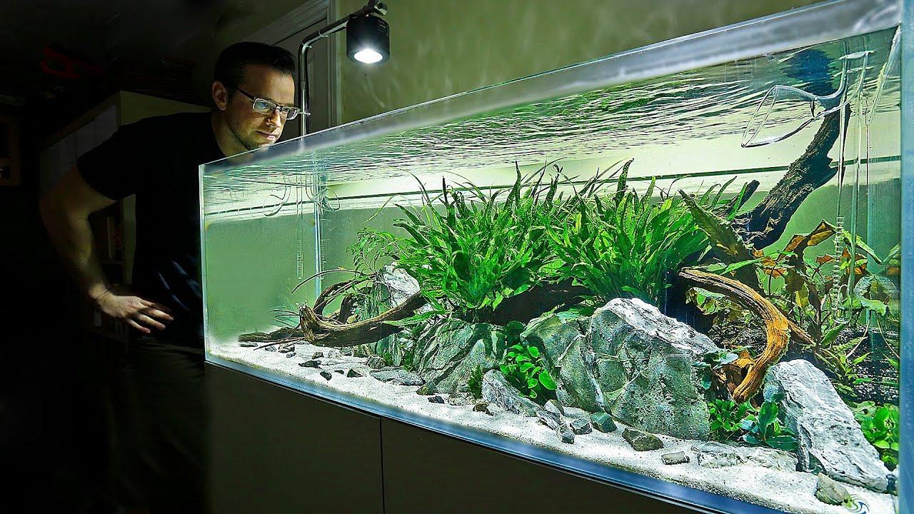 Aquascaper 1200 My Best Yet Youtube