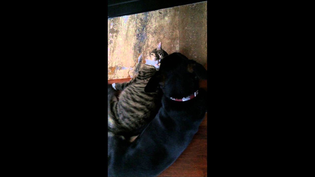 Youtube Fireplace Cat And Dog