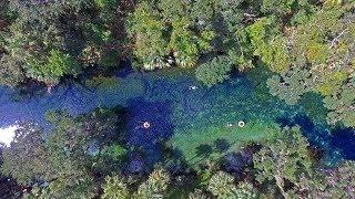Florida Travel: Visit Blue Springs State Park