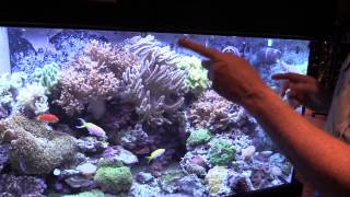 HOW TO: Maintain a Saltwater Aquarium