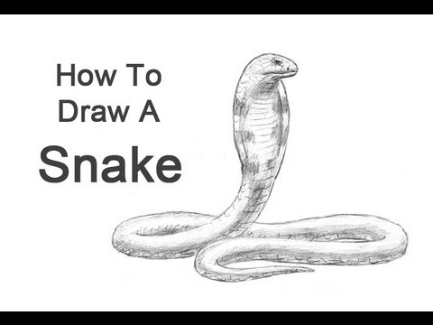 How to draw a snake king cobra youtube how to draw a snake king cobra ccuart Images