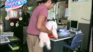 長野県須坂市にあるドッグサロン「犬処ケンケン」の日常です。 看板犬の...