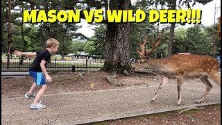 AWESOME Deer Park in Japan   Nara Park