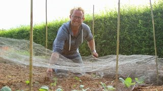 Get Gardening: They shall not pass! (Allotment Week, part 5)
