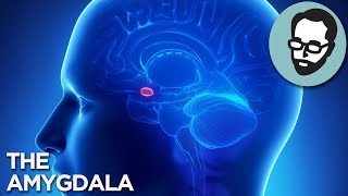 The Pea-Sized Gland That Controls Your Thoughts   Random Thursday