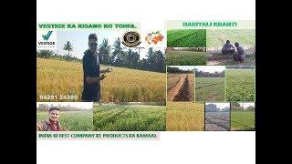 VESTIGE - गेहूँ की खेती में VESTIGE के उत्पादों द्वारा अधिक उपज का जादुई परिणाम