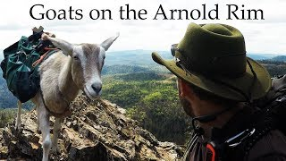 Goats on the Arnold Rim