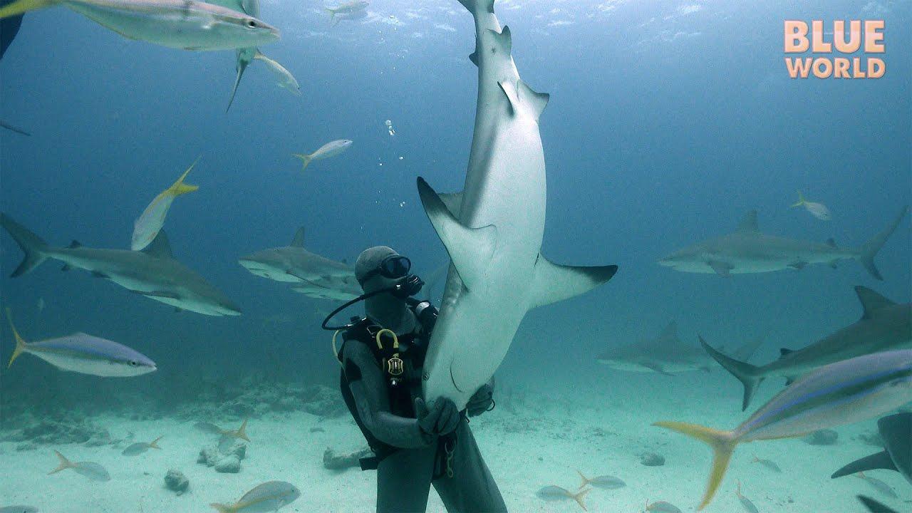 Shark Tonic Immobility Jonathan Bird S Blue World Youtube