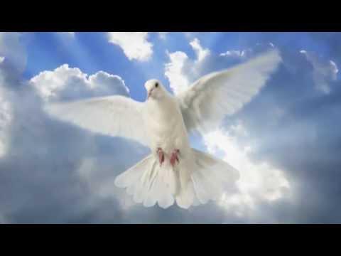 Aktuell wie nie: Hans Hartz  Die weißen Tauben sind müde