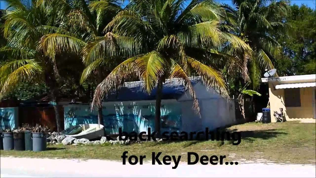 Key west famous no name pub flea market well big for Big pine fishing lodge