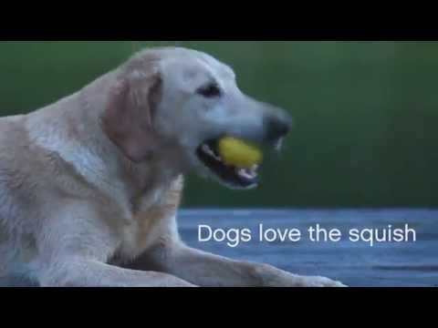 Boz Dog Ball