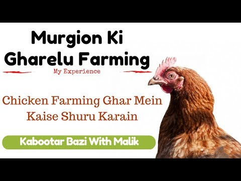 How To Start Poultry Farming Business At Home | Useful Tips For Beginners In Urdu/Hindi By Arshad