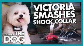Victoria Shatters Huge Shock Collar that was Strapped to Tiny Dog | It's Me or the Dog