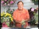 Growing Herbs : Growing Cuban Oragno