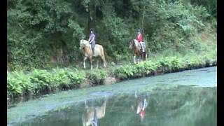 Great Trethew Manor Pony Trekking