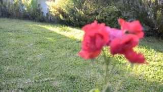 ENYA & ENIGMA   LORD OF THE DANCE-Celtic Dream( Irish Music)