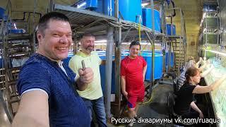 Мегаразводни России. Пермь. Ч2
