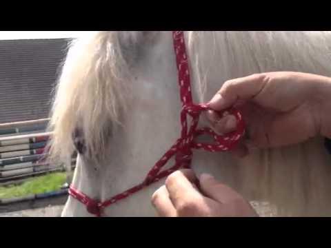 Bondage: Knoten binden für Anfänger mit Video