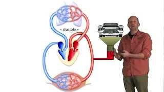Mesure de la tension artérielle thumbnail