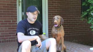 Off Leash Dog Training Testimonial-diego The Vizsla 888.811.dogs