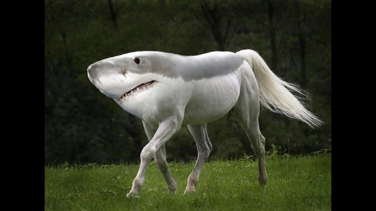 25 Hybrid Animals Species Made In Photo