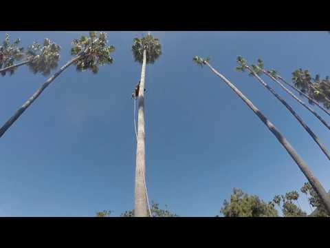 TREE SQUEEZE