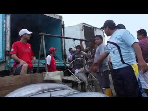 Manta Ecuador Fish Market
