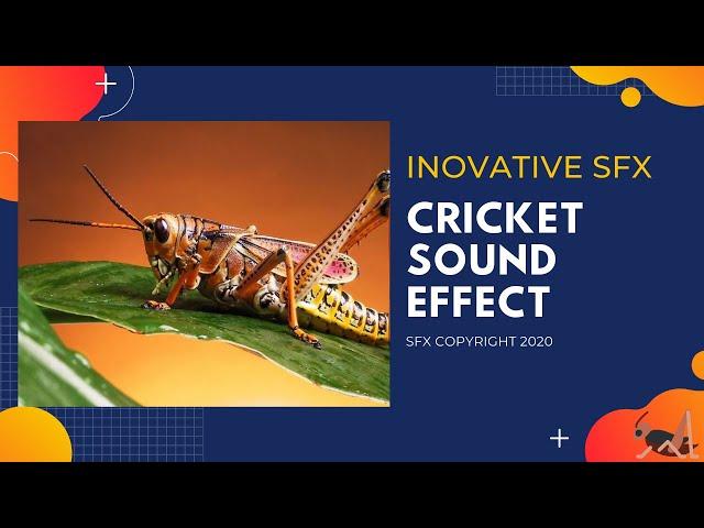 Cricket sound effect