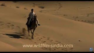 India's Thar Desert In Rajasthan