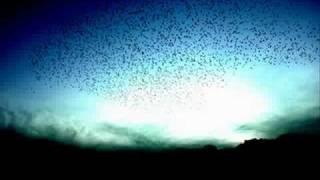 遠藤賢司 - 歓喜(よろこび)の歌