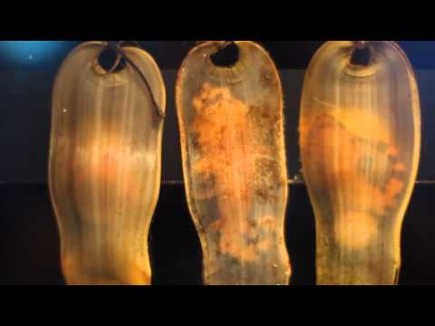 Visit Heal the Bay's Santa Monica Pier Aquarium! HD